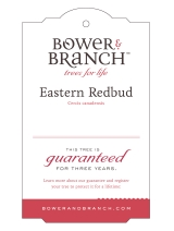 <h5>Eastern Redbud</h5><p>Hang tag design for Bower & Branch</p>