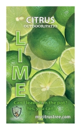 <h5>Lime</h5><p>Custom printed hang tag</p>