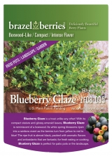 <h5>Blueberry Glaze</h5><p>brazel berries</p>