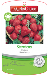 <h5>Strawberry hang tag</h5>