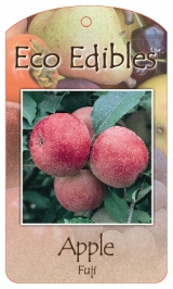 <h5>Apple Fuji</h5><p>Eco Edibles hang tag</p>