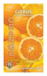 <h5>Orange</h5><p>Custom printed hang tag</p>