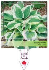 <h5>Liberty Hosta custom stake tag</h5>